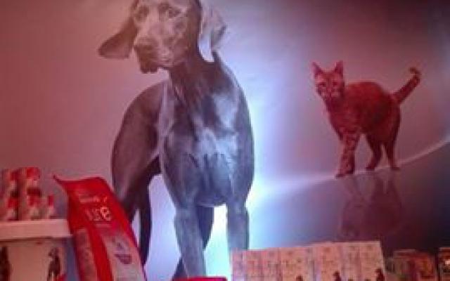 Eurodogshow te Kortrijk 2016